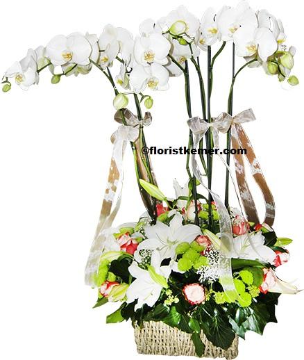 101 beyaz gül buket Şık Beyaz Orkide ve Arajman