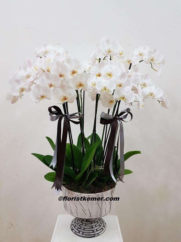 101 beyaz gül buket 4'lü Saksı Orkide Seramik Vazoda